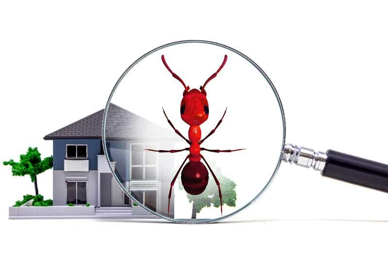 Why Pest Control Business Owners Should Build Relationships With Local Real Estate Agents